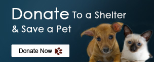 Donate to a shelter & save a pet